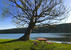 Tillinghast Manor -Seneca Lake Picnic table over looking lake